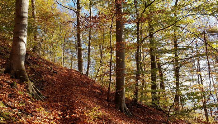 Wandern auf der Schwäbischen Alb