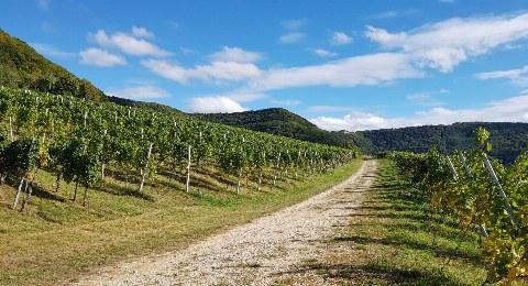 Wandern in den Neuffener Weinbergen am Fuß der Schwäbischen Alb